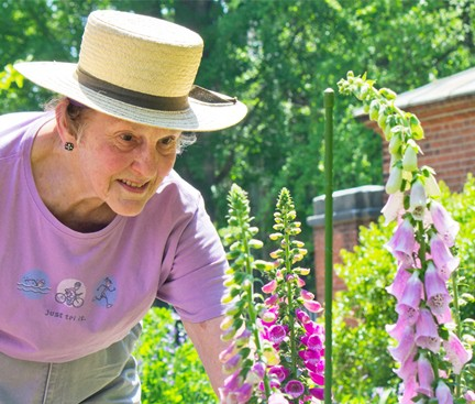 "Volunteer Kathleen ""Kate"" McGrann tends foxgloves at the Pennsylvania Hospital Physic Garden. (Photo courtesy of Penn Medicine)"